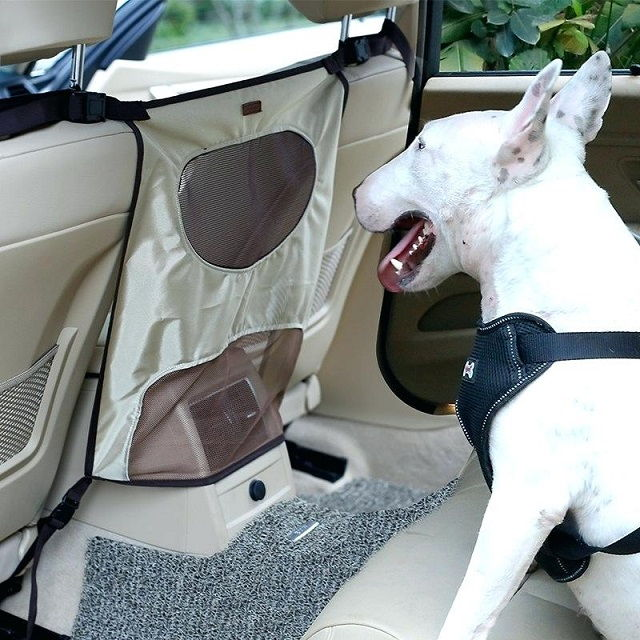 Truck Accessories for Dogs